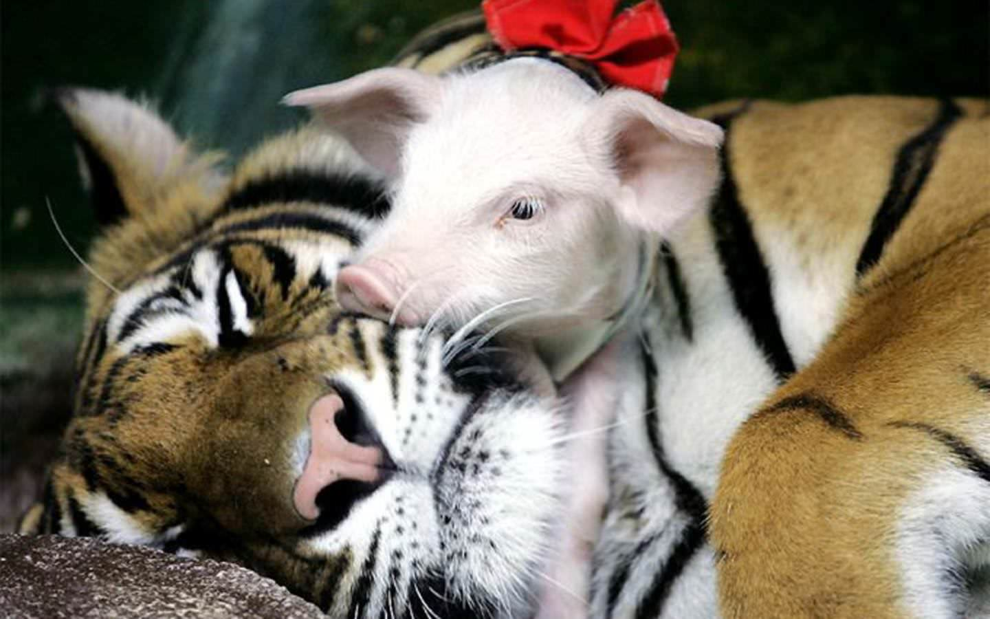 Literally the Best Thing Ever: Interspecies Love