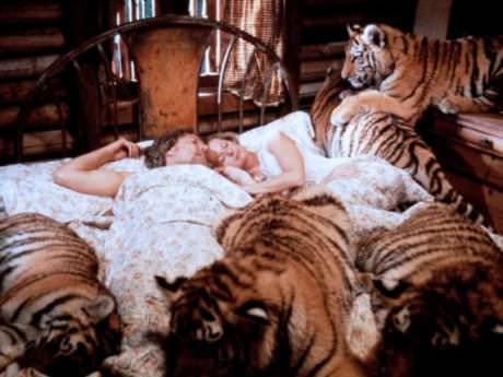 Saturday Links: Tippi's Tigers Edition
