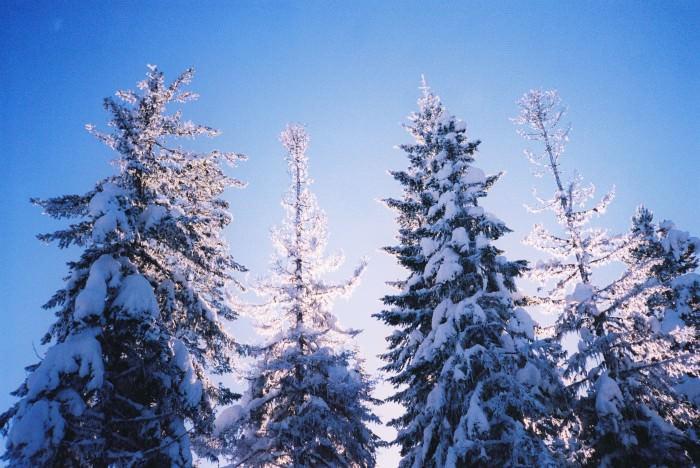 treesyo