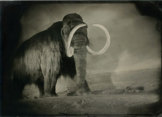 """Wooly Mammoth"" by Robb Kendrick."