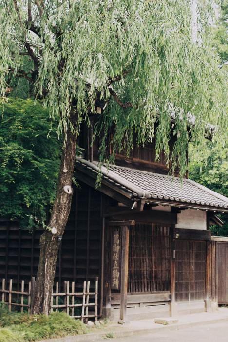 yoshiko16