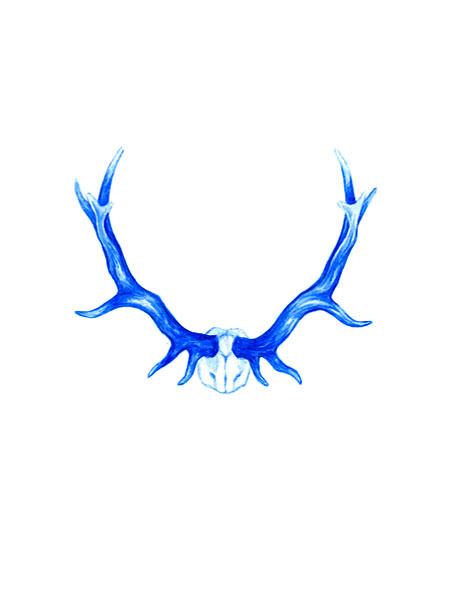 _allegralockstadt_winnerscircle_antlers