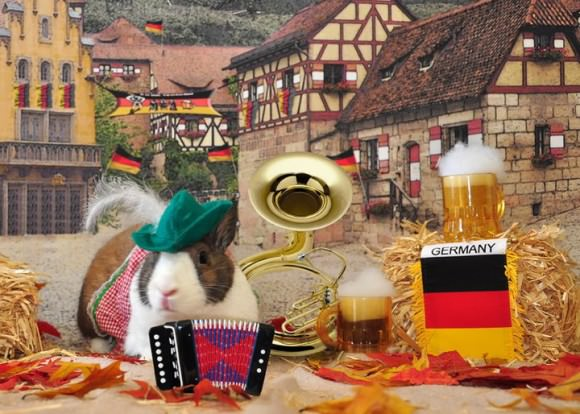 This is my first bunny, Midgeon P. Bundlesworth III enjoying an Oktoberfest celebration. NO PHOTOSHOP.