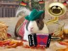 DIY Elaborate Pet Photo Shoot