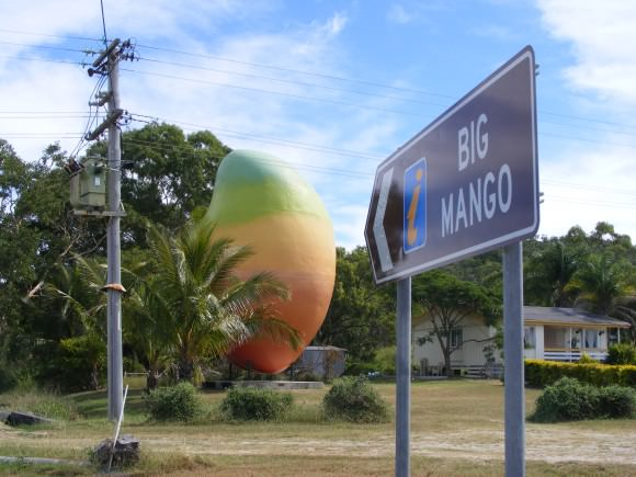 HAVE YOU SEEN THIS MANGO? Photo by Whitsundays.