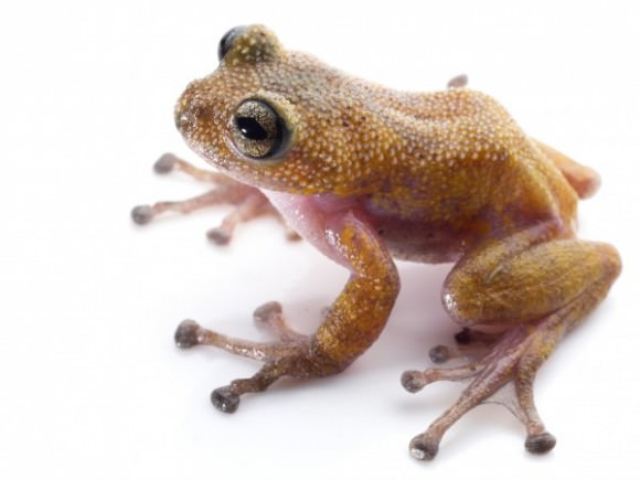 This frog = my spring style inspiration. Photo by Jodi Rowley via National Geographic.