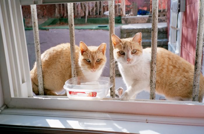 Backyard cats in Brooklyn.