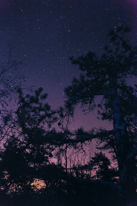 Night Sky (Knotty Pine) (2011) by Ryan McGinley.