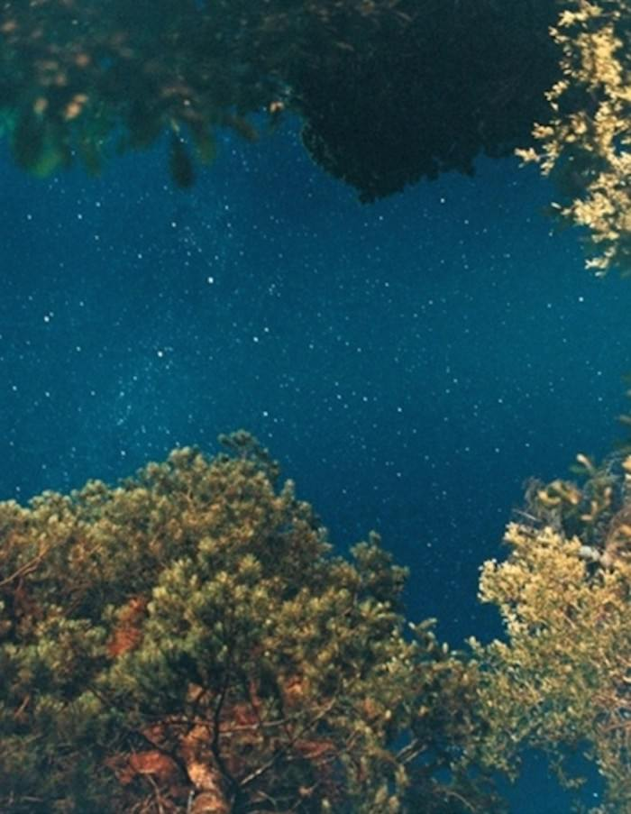 Night Sky (Pine) (2010) by Ryan McGinley.