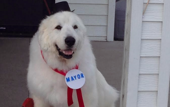 Photo of Duke, the honorary Mayor of Cormorant via Can Dogs Eat.