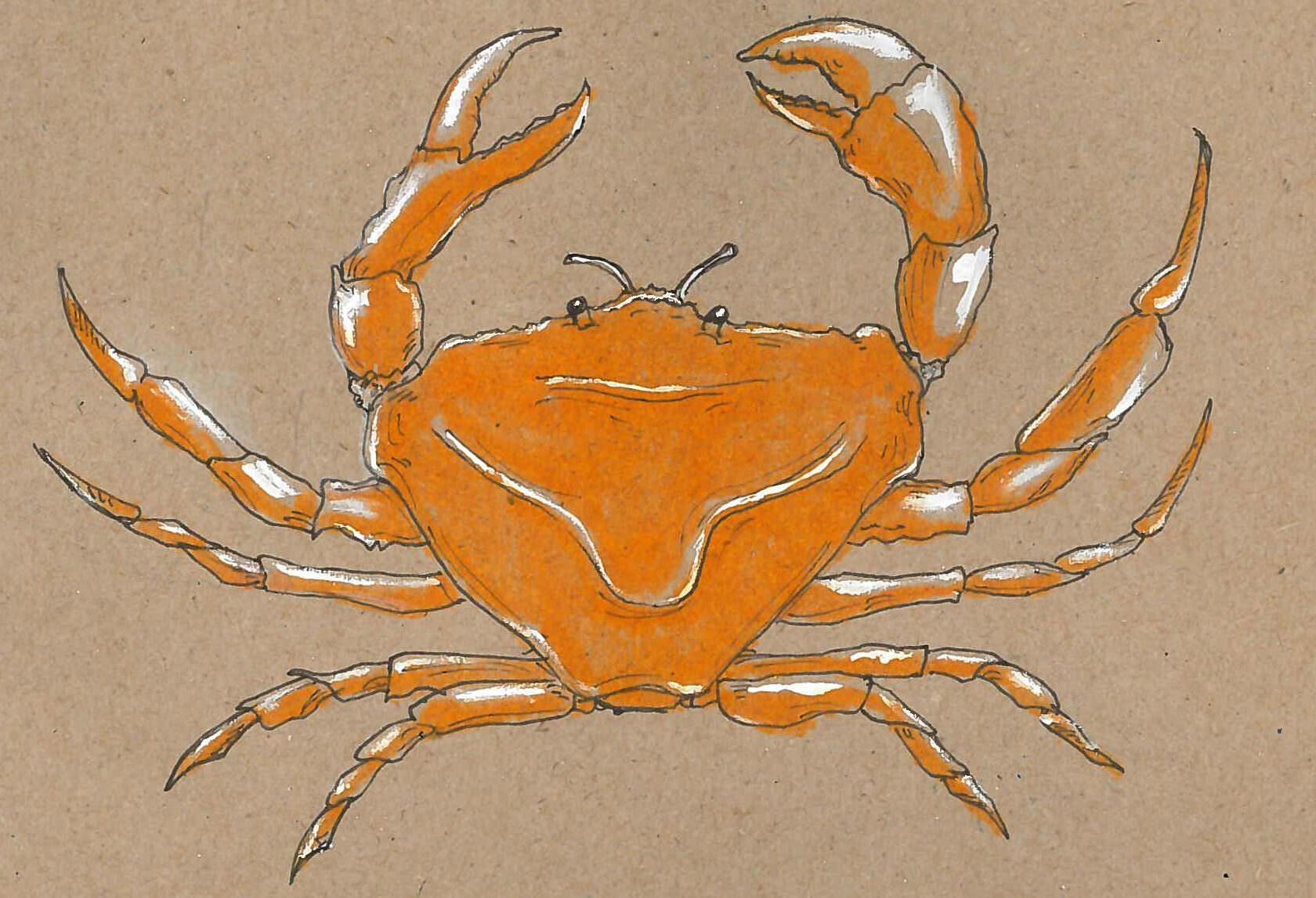 Feelin' crabby. —Ella