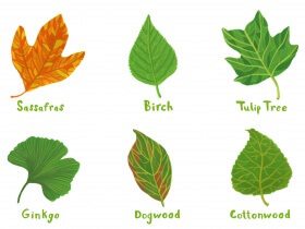 Saturday Printable: Leaf Identification Guide