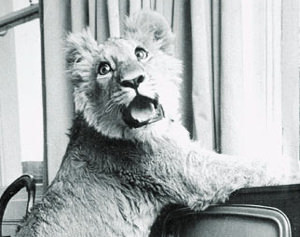 Literally the Best Thing Ever: Christian the Lion